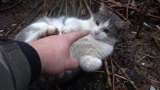 Cute cat playing with me