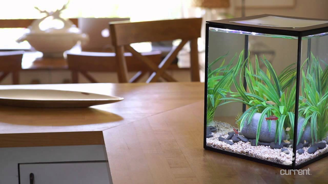 solo desktop aquarium with remote controlled led lighting youtube