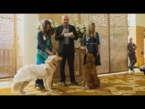 Patients Watch as Hospital Comfort Dogs 'Wed' in 'Pawsome' Ceremony