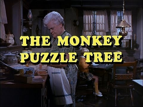 The Ghost & Mrs. Muir (S1,E10) - The Monkey Puzzle Tree (HD)