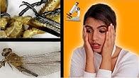 الحشرات الميتة تحت الميكروسكوب الجزء (١) | لا يفوتكم 😱
