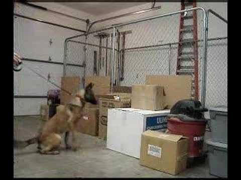 Passive Alert Detection Dog Training