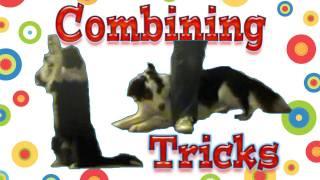 Combining Tricks: Dog Training