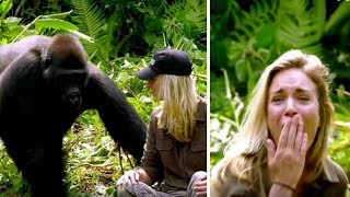 Download He Raised Gorilla, 6 Years Later, It Meets His Wife – Despite Warnings She Walks Too Close Mp3 and Videos