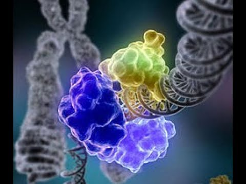 هآآآم جدا!!! Les fonction des ADN polymérases!!!