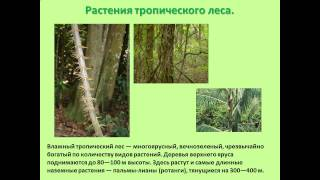 презентация на тему животные и растения тропических лесов 2 класс