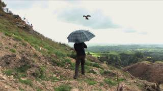 Karearea: the pine falcon | Movie trailer