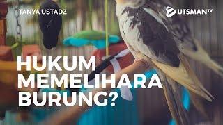 Download Video Tanya Ustadz - Hukum Memelihara Burung - Ustadz Dr. Musyaffa' Ad-Dariny, M.A. MP3 3GP MP4