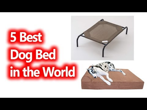 best-dog-beds-in-the-world-buy-in-2019