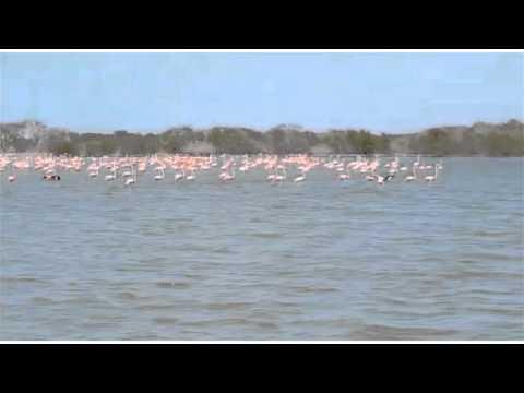 Playa Camarones - Santuario de los Flamencos