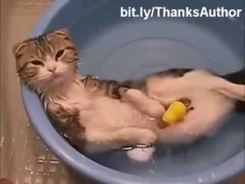 Как коты моются видео