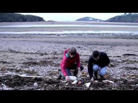 Plastics, plankton and poo: Investigating the impacts of marine microplastics
