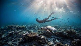 和綠蠵龜共舞|小琉球寶那那民宿自由潛隊海底活動