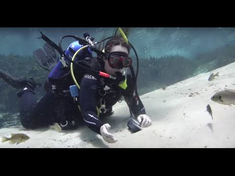 Where Does Fresh Water Come From? -Scuba Diving in Freshwater Florida Springs