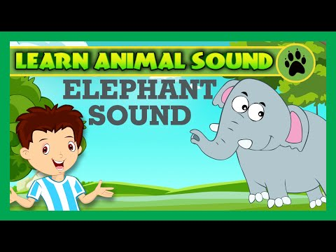 Animal Sound for Children | Elephant Sound, Monkey Sound and Peacock Sound | Kids Hut