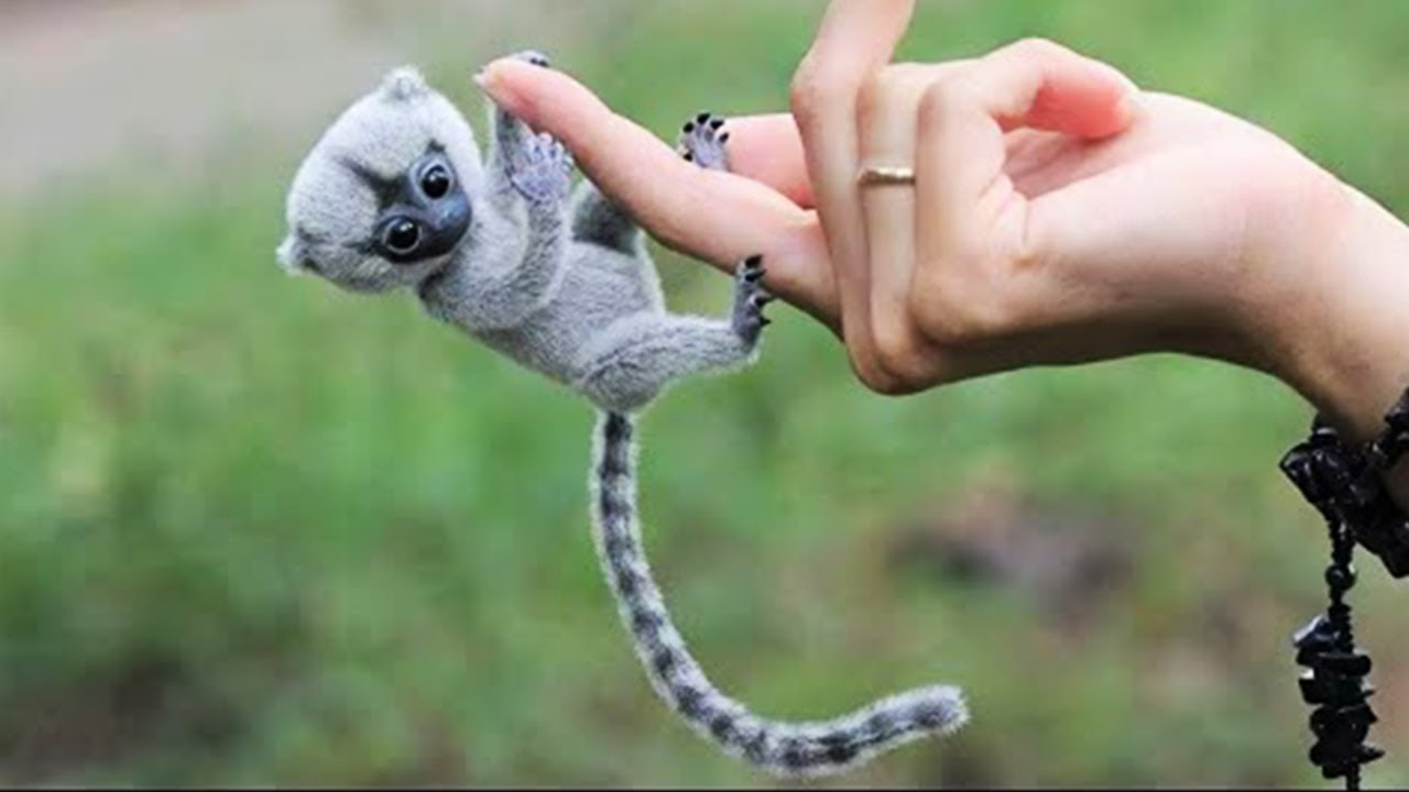 Download 15 Cute Exotic Animals You Can Own As Pets