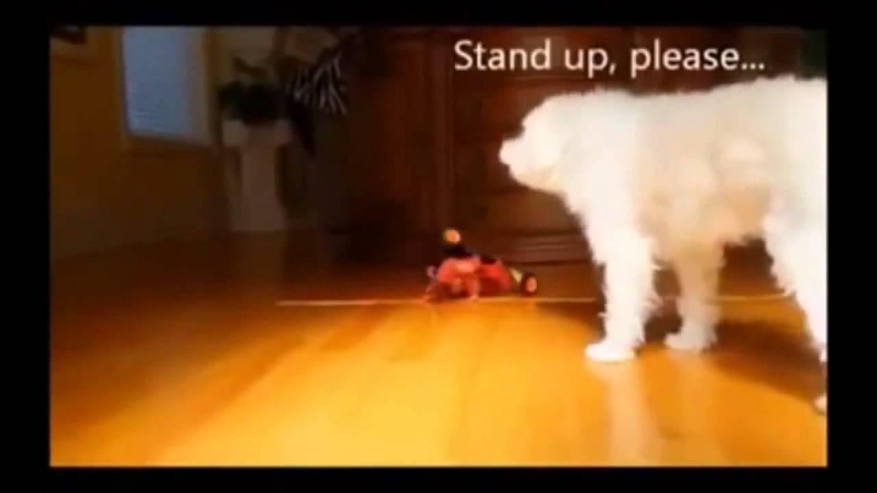 סרטוני כלבים מצחיקים