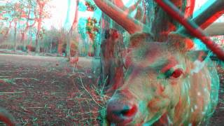 Nature & Animal 3D Movie (RED-CYAN ANAGLYPH 3D) HD VIDEO