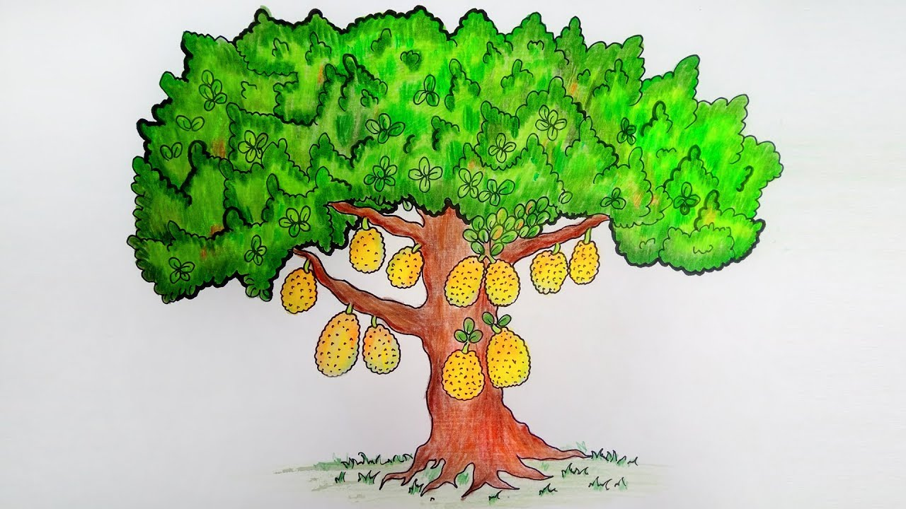 Jackfruit Tree Very Easy Drawing How To Draw A Jackfruit Tree Youtube Free for commercial use no attribution required high quality images. jackfruit tree very easy drawing how to draw a jackfruit tree