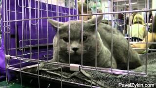 Выставка кошек и собак. Краснодар экспо.mp4