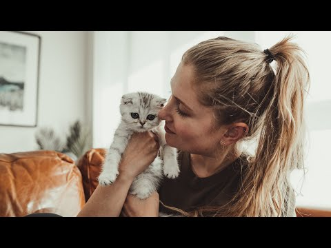 We've been keeping this from you  our new Scottish fold kitten! | weekly vlog