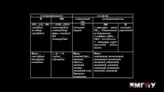Русский язык. Выпуск 13. Правописание Н в полных формах прилагательных и причастий.