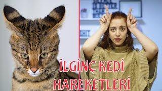 Kedi Dili ve Edebiyatı - Kedilerde Beden Dili Nasıldır?