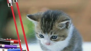 Gato VS Laser