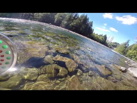 pink salmon on the fly