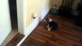 Corgi vs. Glade plug-in