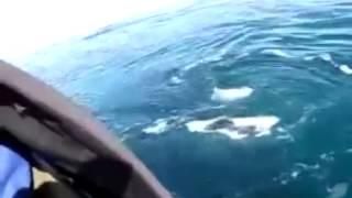 Девушка испытывает оргазм от вида китов