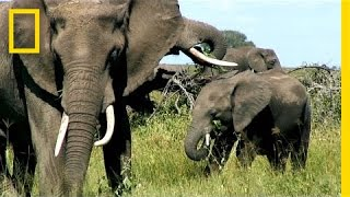 Can Elephants Jump? 5 Facts About the Largest Land Animal