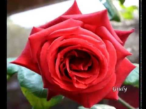 Ditelo con le rose rosse amore passionale youtube for Quadri con rose rosse