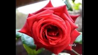 Ditelo con le ♥ ROSE ROSSE ♥ AMORE ♥ PASSIONALE ♥