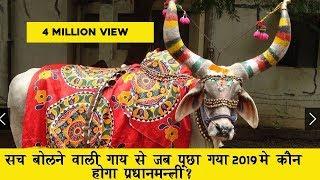 सच बोलने वाली गाय से जब पुछा गया  2019 में प्रधानमन्त्री कौन होगा ?