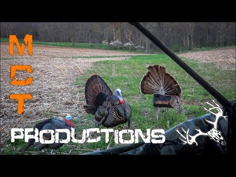 Bowhunting Turkeys: Slow Motion Shots