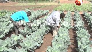 Kisumu Youth adopt modern agriculture methods