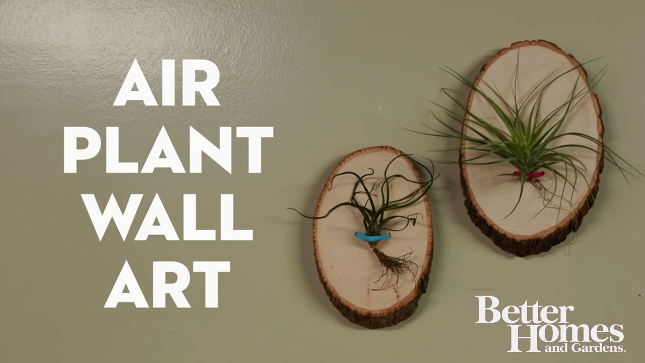 & Air Plant Wall Art - YouTube