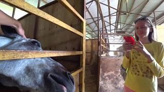 Кормим лошадей в Сочи, медведи и коровы на конной базе Фишт в Дагомысе