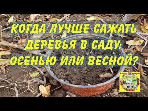 Когда лучше сажать деревья в саду: осенью или весной? | огороднику | урожайный | овощеводу | горяченко | деревьев | украина | посадка | дачнику | советы | осенью