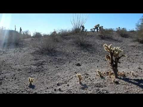 Hiking Arizona - Estrella Mountain Regional Park