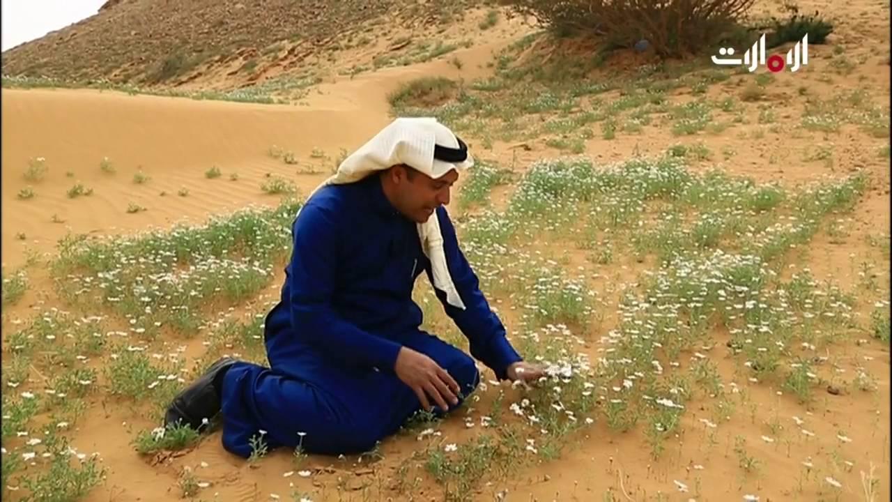 على خطى العرب لقاء زوج ليلى بقيس Youtube