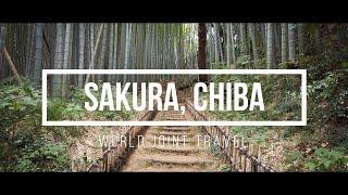 【WJT Online Tour】Part  3 : Sakura, Chiba