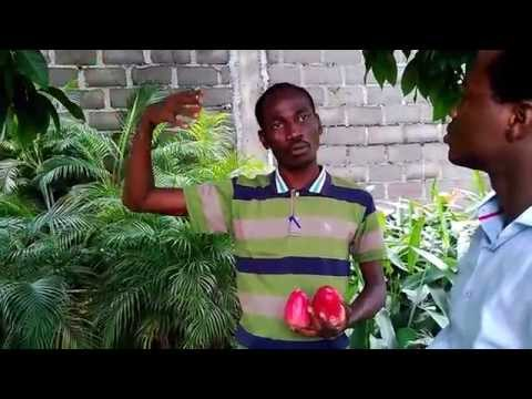 "The forgotten Apple in Nigeria ""Bell Apple"""