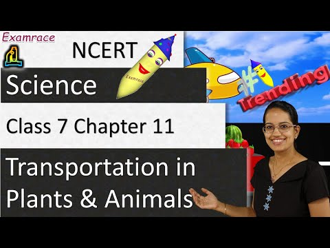 NCERT Class 7 Science Chapter 11: Transportation in Plants and Animals (NSO/NSTSE)