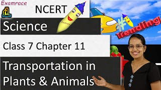 NCERT Class 7 Science Chapter 11: Transportation in Plants and Animals (NSO/NSTSE) | English