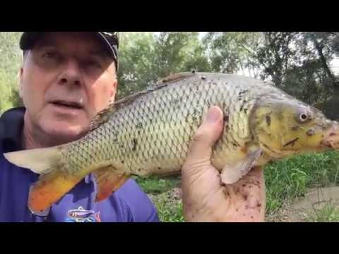 Fishing the Yarra River in the suburbs to catch carp to make soup!!!