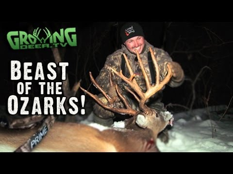 Bow Hunting Whitetails: 181