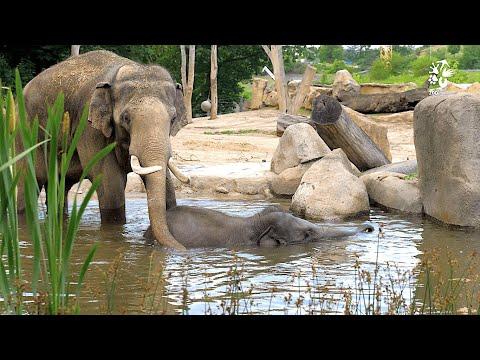 Sloní táta na plný úvazek