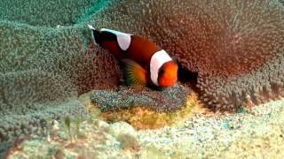 2017珊瑚保育週